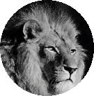 Asante Tanzania Safaris Logo