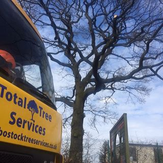 Bostock Total Tree Services Logo