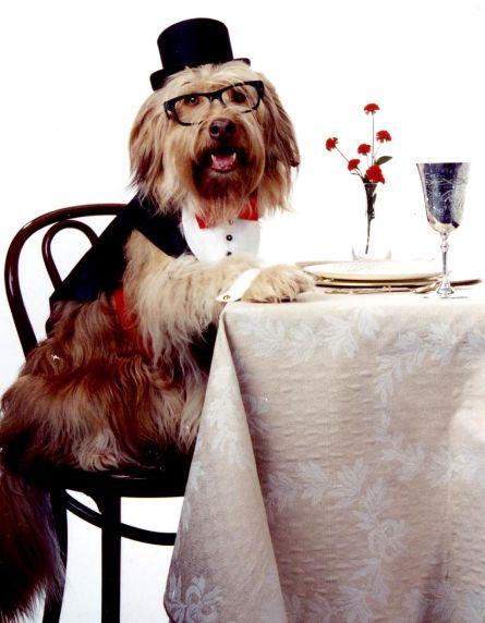 Doggie Manners Logo