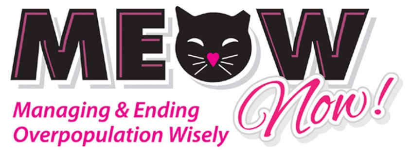 Image result for MEOW Now - Providing TNVR to Pinellas County Community Cats