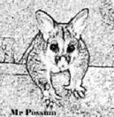 MrPossum Logo