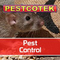 Pescotekuk Logo