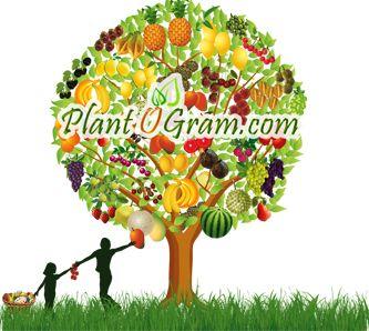 PlantOGram.com Logo