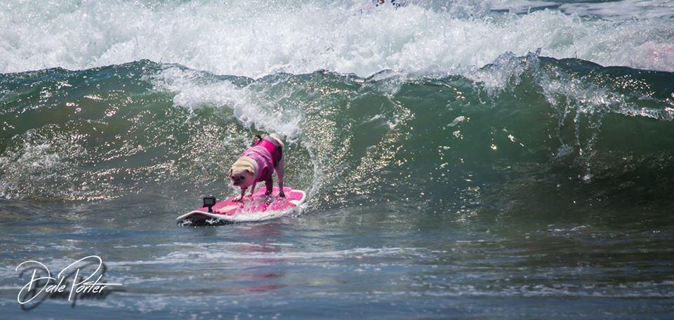 Surf Gidget Logo