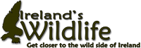 Ireland's Wildlife Logo