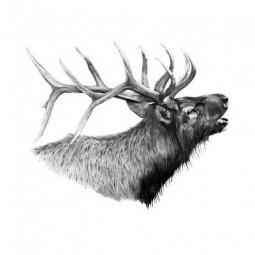 Buffalo River Diaries Logo