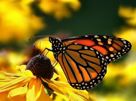 butterflyandbirdflowers Logo