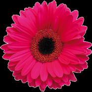 flowers4 Logo