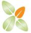 Functional Foods Inc Logo