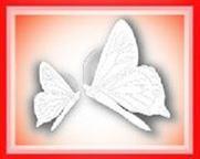 Manifesting My Destiny Logo