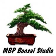 MBP Bonsai Studio Logo