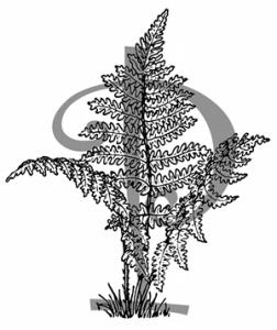 purplefernspress Logo
