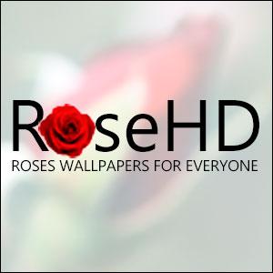 rosehd Logo