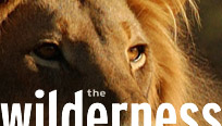 thewildernessociety Logo