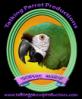 Talking Parrot Productions Logo