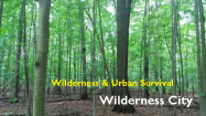 wildernesscity Logo